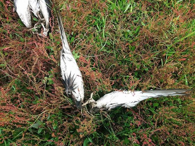 Memento mori 11
